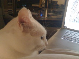 Gorby peruses the laptop and wonders why it's in her way.